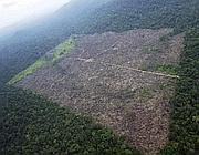 Il land grabbing inizia spesso con il disboscamento della foresta, come nel territorio degli Xingu in Amazzonia (Reuters)
