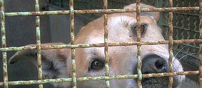 Cani senza padrone, 600mila in Italia Torna l'allarme sugli abbandoni estivi