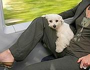 Sempre pi� difficile per i  proprietari di animali viaggiare sui treni a lunga percorrenza (Ansa)