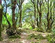 Il bosco sacro di Monteluco