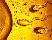La fecondazione di un ovulo