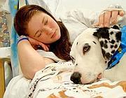 Non solo pet therapy: un giudice di Varese ha stabilito il diritto per i pazienti di ricevere in visita anche i loro cani (Ap)