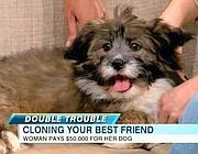 Il piccolo Double Trouble ospite di Abc News