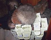 Prodotti realizzati con pelo di opossum e lana merino in vendita a Wellington (Foto: E. Kay)