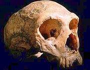 Un teschio di uomo di Neanderthal