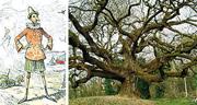 L albero di Pinocchio è diventato un monumento!!
