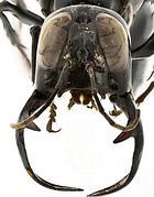 Un'esemplare della supervespa