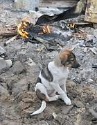 Cane sopravvissuto a un incendio