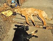 Cani uccisi (Cisternino-Oipa)