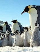 Un fotogramma del documentario «La marcia dei pinguini»