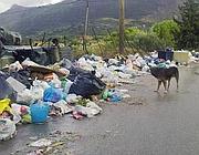Cani in mezzo ai rifiuti a Monreale