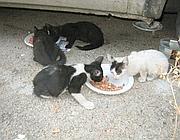 Colonia felina  a Monreale