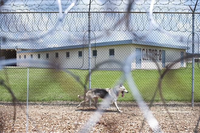 Uno dei cani di guardia al Penitenziario della Louisiana (online.wsj.com)