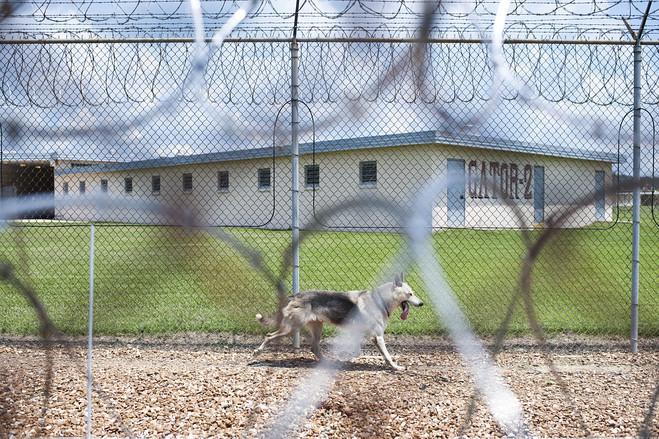 Uno dei cani di guardia al Penitenziario della Louisiana (online.wsj.com)
