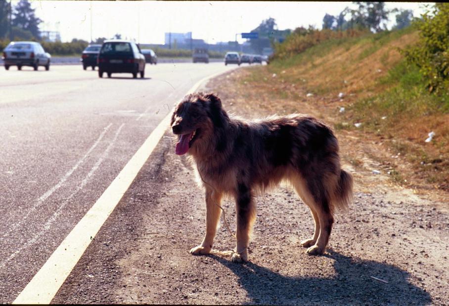 Cani abbandonati a rischio di essere travolti per strada (Fotogramma)