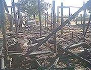 La stalla distrutta dal rogo