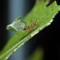 Una formica nel suo habitat naturale