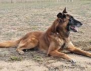Matrix, il cane anti-mine si prepara al congedo