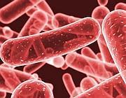 Il batterio 'Klebsiella pneumoniae'