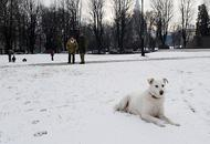 Torino coperta di neve (Ansa)