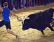 Raton durante una corrida a Valencia (Ap)
