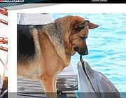 Allo Zoomarine  il contatto di un cane con un delfino, vietato per legge (Foto dal sito di Zoomarine)