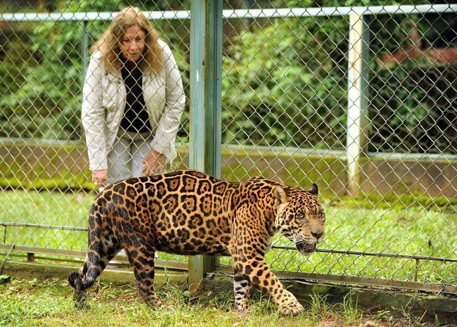 La fondatrice della ONG Nex Cristina Gianni gioca con un giaguaro (Afp)