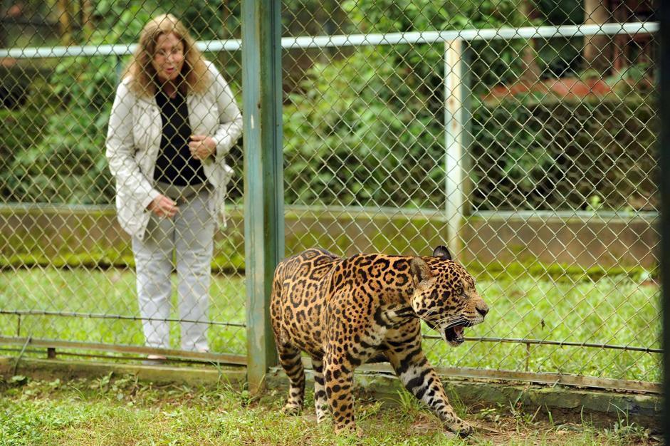 Cristina Gianni gioca con un giaguaro (Afp)