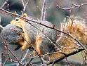 La super-mamma scoiattolo salva il suo piccolo rimasto incastrato