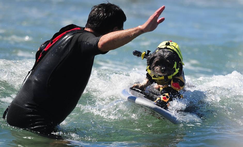 Cani sulla tavola da surf - Tavola da surf motorizzata prezzo ...