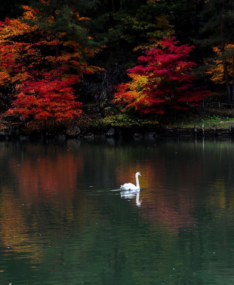 Non solo ritratti. I soggetti di Homatsch sono anche paesaggi naturali con una particolare attenzione ai colori. Qui «Autunno», Giappone. (Heinz Homatsch)