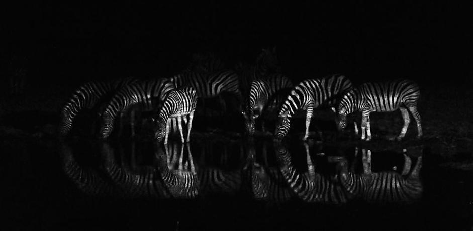 «Night reflections», Botswana (Heinz Homatsch)