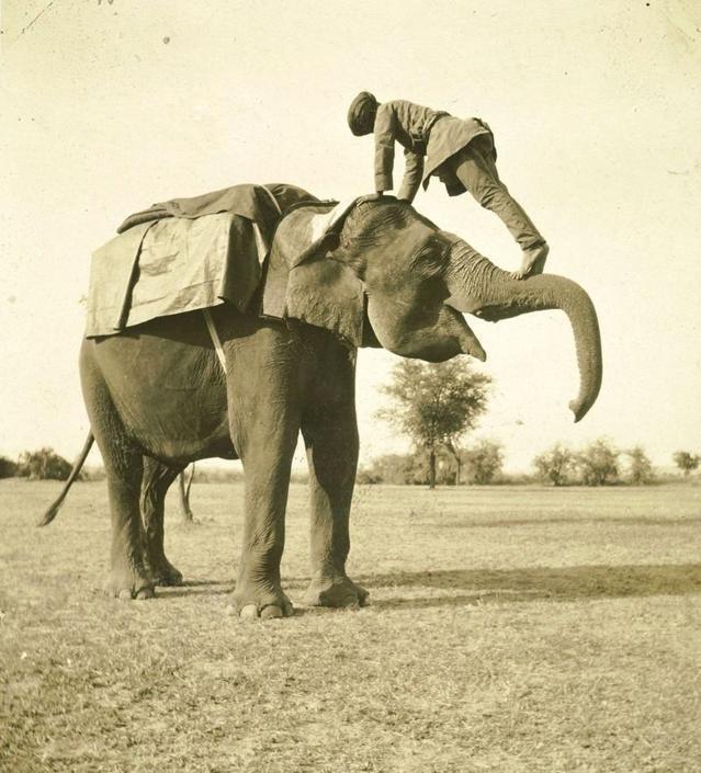 Il ?mamut? sale sull?elefante, collezione ?Piscicelli?, India, 1913-1914, foto di Maurizio Piscicelli