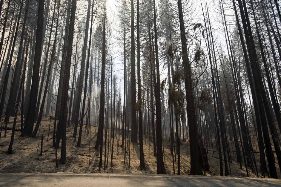 Usa yosemite in fiamme for Cabine di alloggio del parco nazionale di yosemite