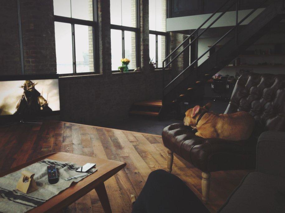 2 - La foto del salotto di casa di David, nato e vissuto a Manhattan. Poltrona con cane e tavolino con iPhone. Karp � ceo di Tumblr, capace di 105 milioni di blog e 300 milioni di utenti unici al mese.