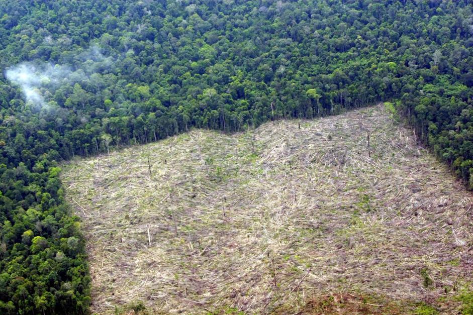 Le piantagioni di palme da olio sono la prima causa di deforestazione, in particolare in Indonesia, come qui nel distretto di Indragiri Hulu della provincia di Riau, a Sumatra (Epa/Indahono)