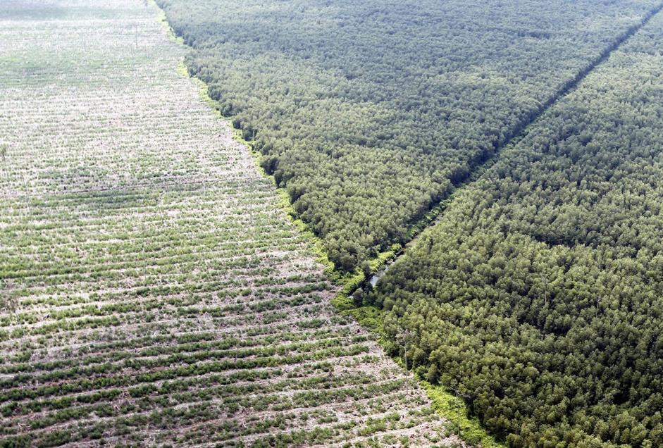 Greenpeace e le associazioni ambientaliste chiedono all'Indonesia di estendere la moratoria di due anni sulla deforestazione che dovrebbe scadere a fine maggio (Epa/Indahono)