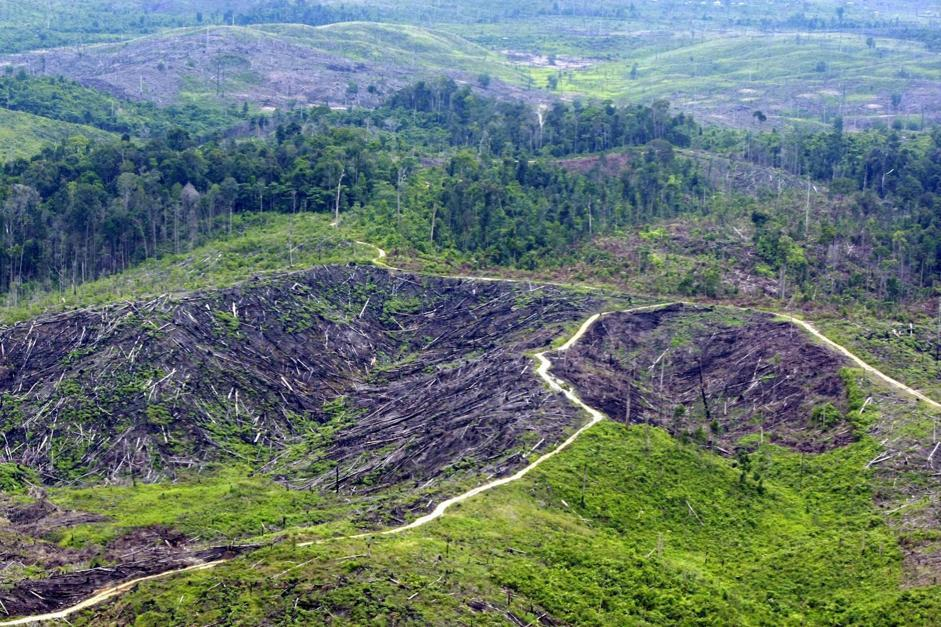 La deforestazione, infatti, non solo distrugge gli ecosistemi ma in Indonesia ha generato conflitti sociali (Epa/Indahono)