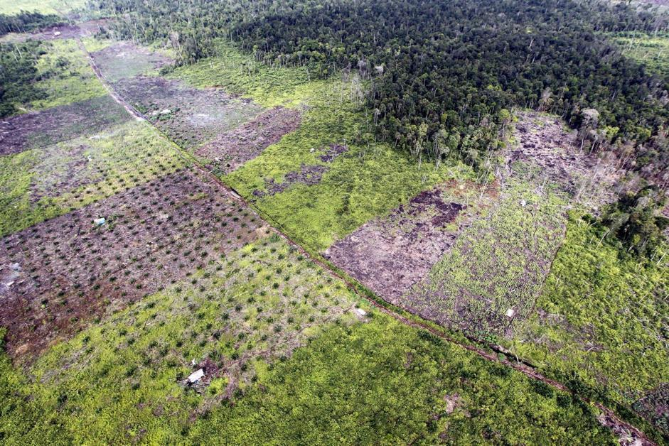 Le popolazioni più povere, infatti, hanno perso i diritti di accesso alle risorse forestali (Epa/Indahono)
