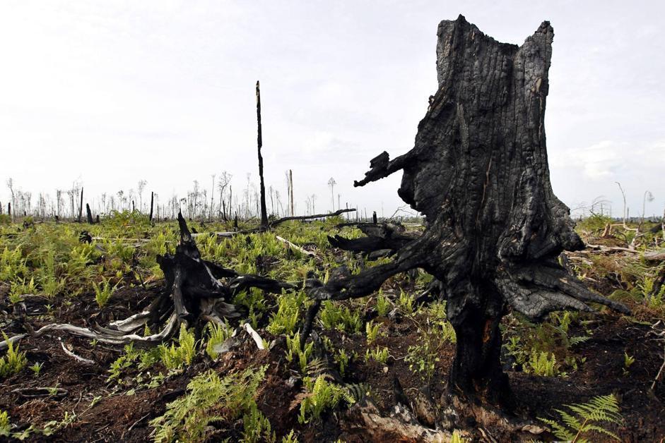 Una foresta distrutta nel distretto di Kuala Cenaku, nella provincia di Riau a Sumatra (Epa/Indahono)