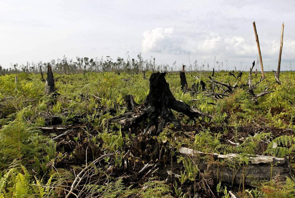 L'Indonesia aveva un tasso di deforestazione di 35 mila chilometri quadrati all'anno tra il 2002 e il 2009 (Epa/Indahono)