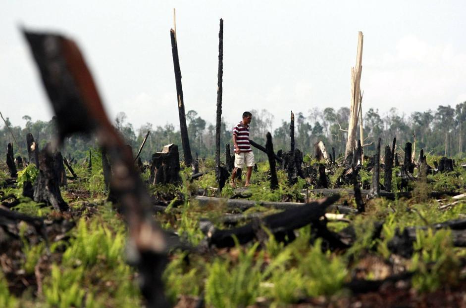 Ora il tasso di deforestazione è sceso a 4.500 chilometri quadrati all'anno (Epa/Indahono)