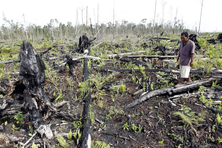 Tuttavia l'Indonesia rimane tra i principali produttori di gas serra del mondo proprio a causa della deforestazione (Epa/Indahono)