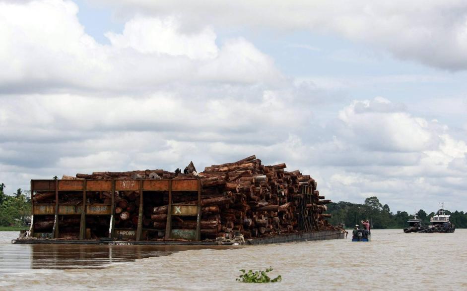 Chiatte cariche di legname sul fiume Kampar, nel distretto di Teluk Meranti (Epa/Indahono)