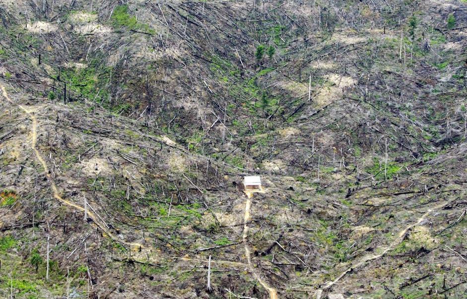 La deforestazione in Indonesia non risparmia nemmeno i parchi nazionale, come in questo caso nel Parco nazionale Tesso Nilo, nella provincia di Riau a Sumatra (Epa/Indahono)