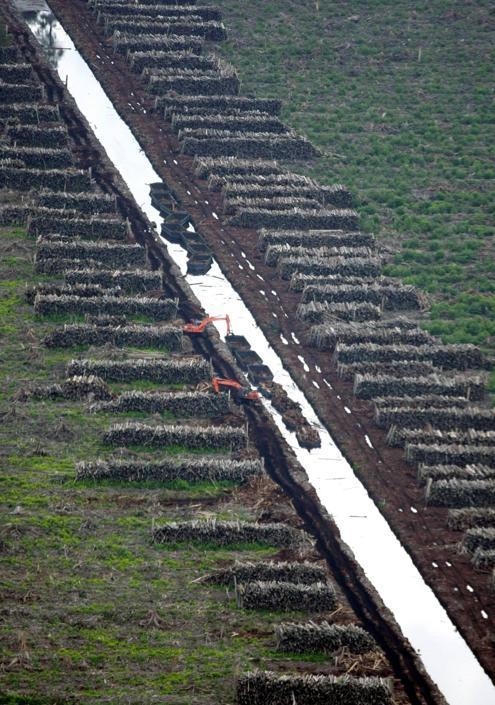 Un canale ricavato in una foresta nel distretto di Indragiri Hulu (Epa/Indahono)