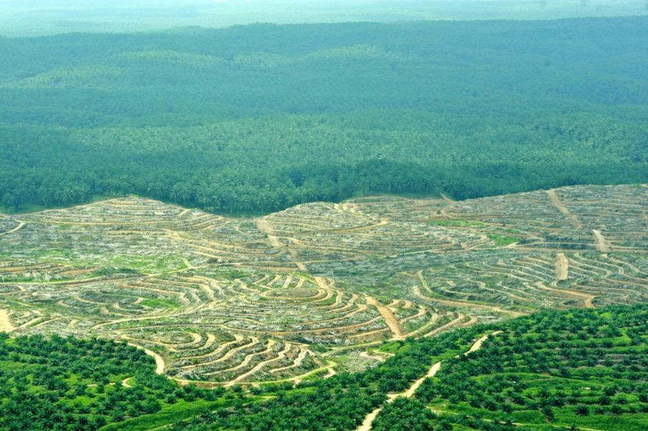 Ecco come appaiono le piantagioni di palme da olio dopo la deforestazione nel distretto di Indragiri Hulu (Epa/Indahono)