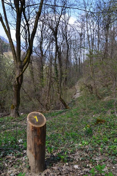 Maso Fratton, Parco Adamello-Brenta (Bragonzi/Wwf)