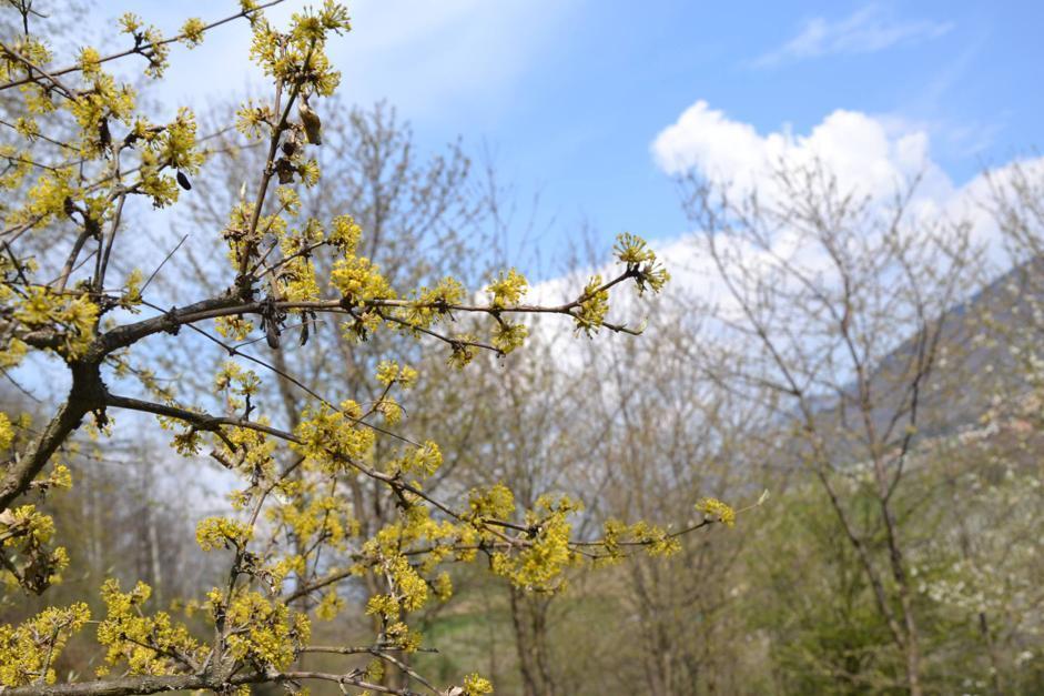 Corniolo, Maso Fratton, Parco Adamello-Brenta (Bragonzi/Wwf)