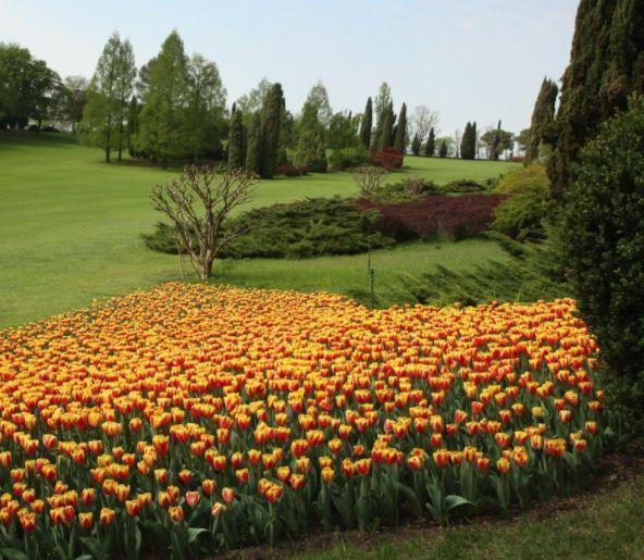 A Sigurtà fiorisce un milione di esemplari di tulipani